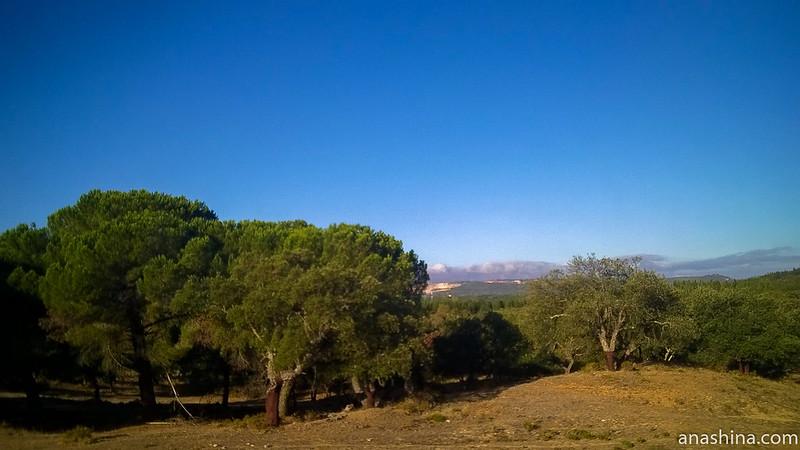 Пробковый дуб в Португалии