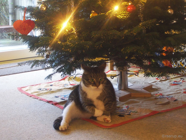 After his Christmas dinner - Happy Caturday