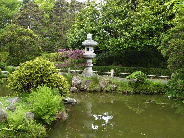 San Francisco, CA, Golden Gate Park, Japanese Tea Garden, Pond with Lantern