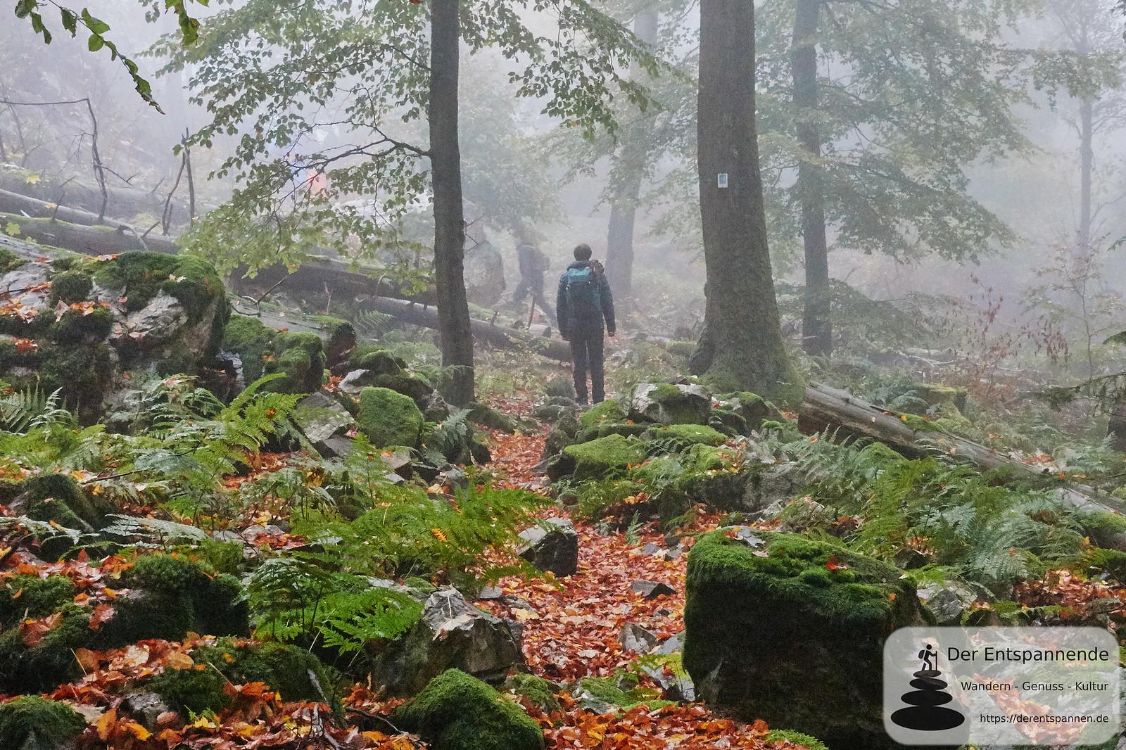 Nebel, Farne und Moos auf dem Saar-Hunsrück-Steig, Etappe 12