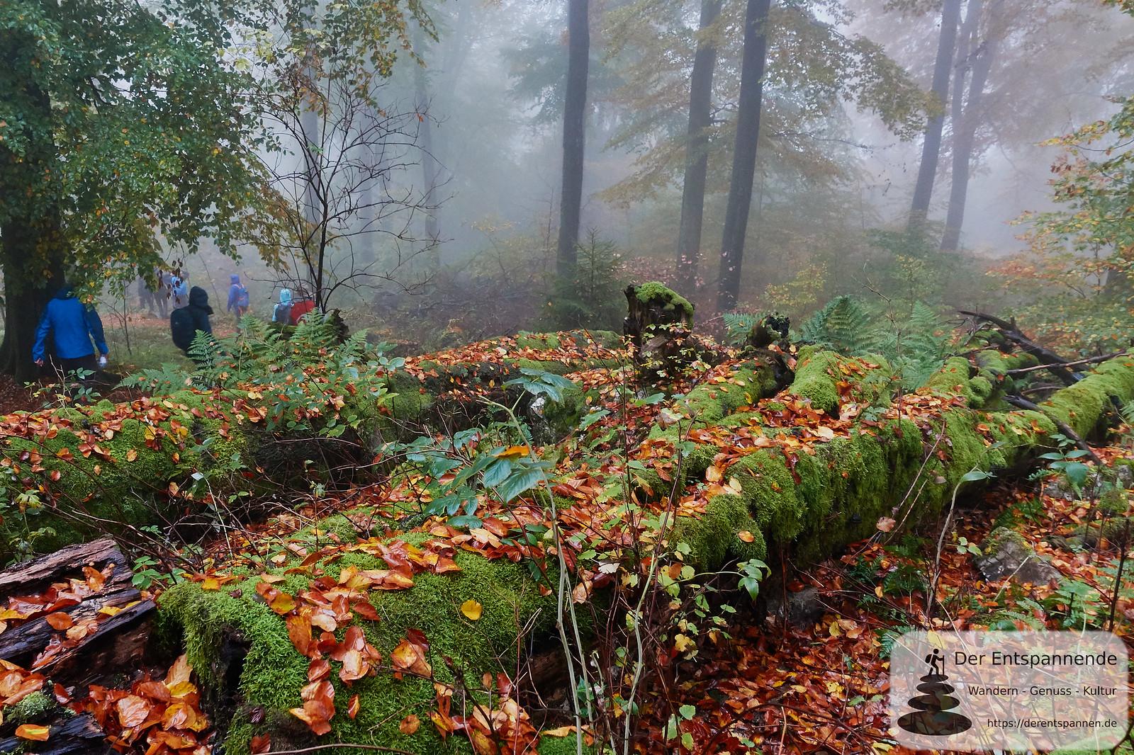 Nebel und Moos auf dem Saar-Hunsrück-Steig, Etappe 12