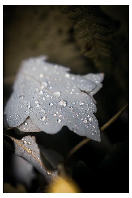 Dew in the Dark - Jenkintown Arboretum - Jenkintown PA_Web 1-E_Scaled