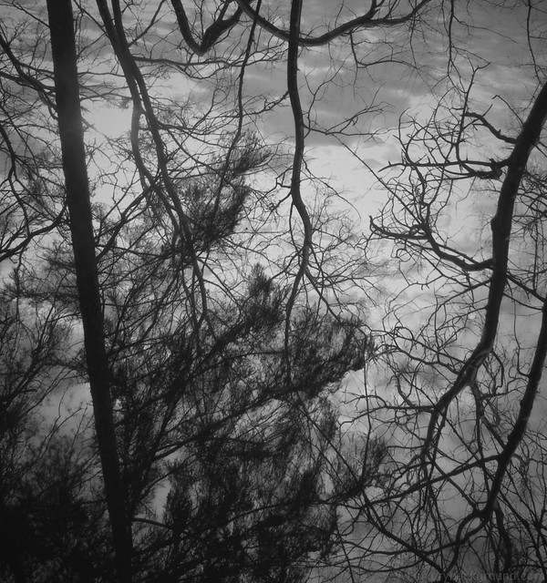 Winter abstract photo