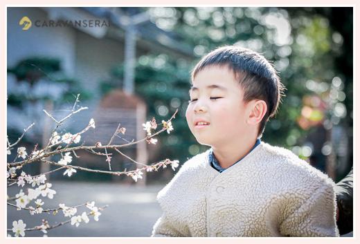四季桜の香りを嗅ぐ男の子