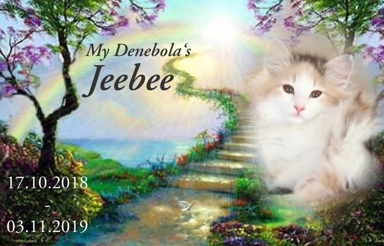 Memory of Jeebee