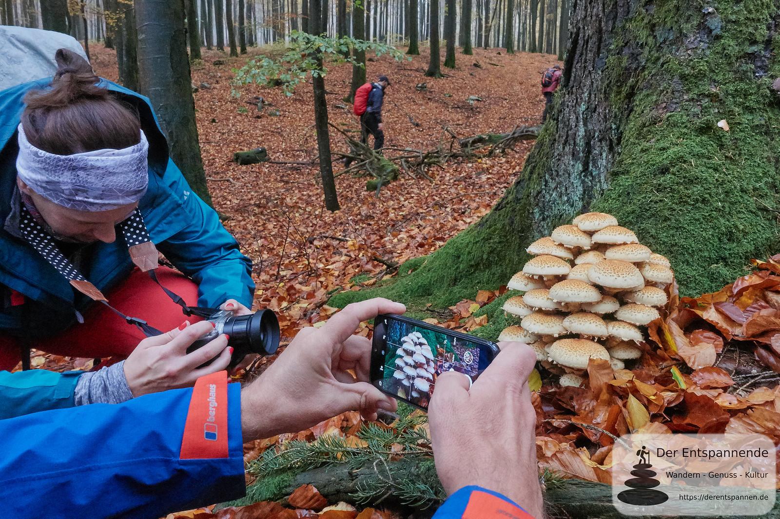 Blogger fotografieren, die Pilze im Wald fotografieren