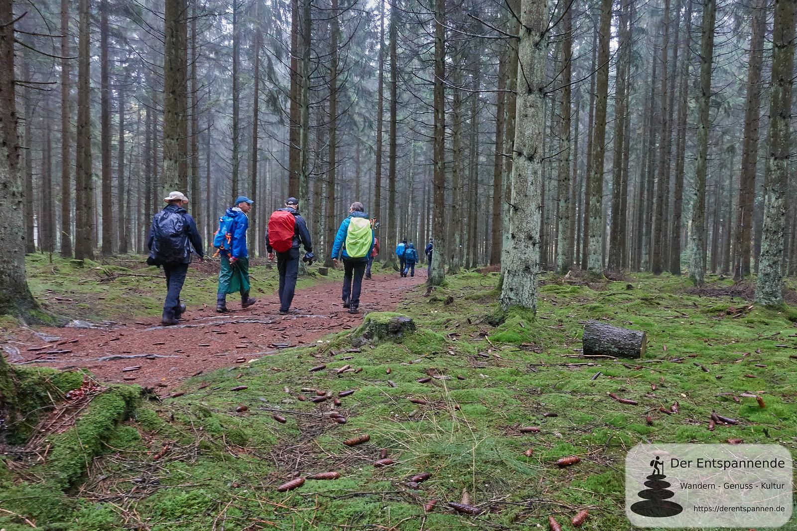 Moosboden auf dem Saar-Hunsrück-Steig, Etappe 12