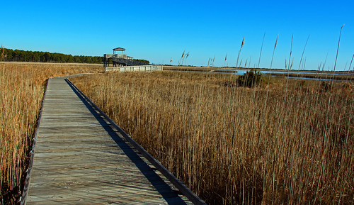 bodieislandnc wildlifeviewingstation northcarolina outerbanks nikond7100 d7100