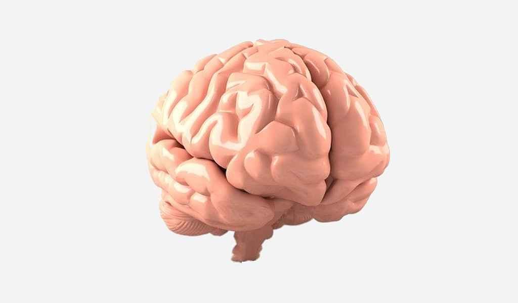 Une nouvelle protéine jouerait un rôle dans l'Alzheimer