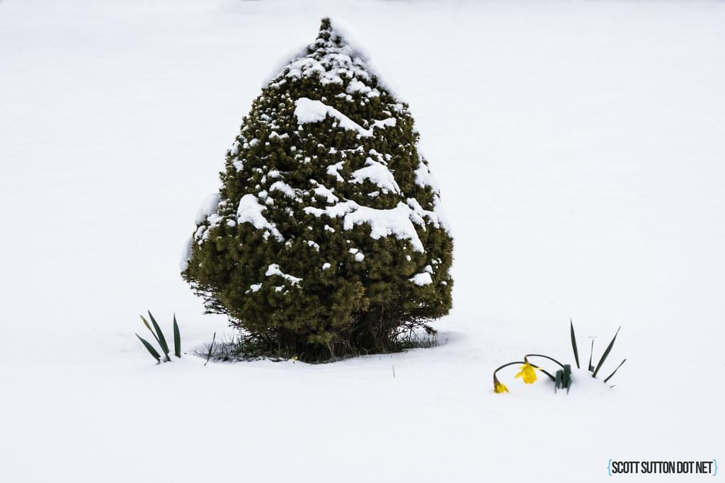 Winter scenes in Machen