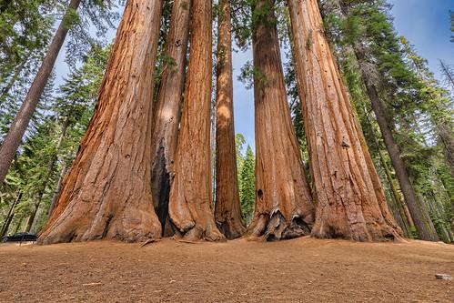 Parker Group Sequoias