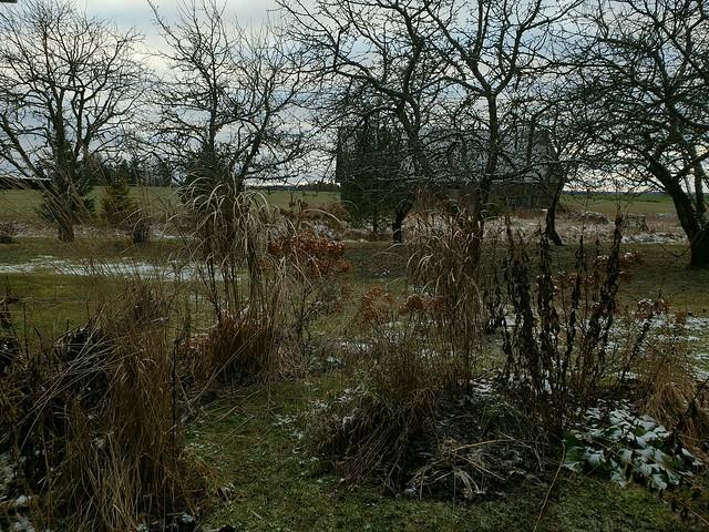 Garden Beds & Orchard