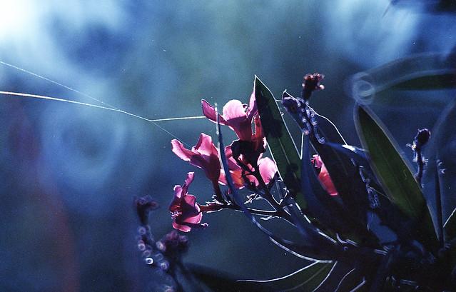 floral suspension