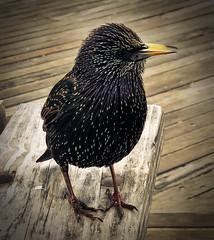 Winter Bird at Coney Island