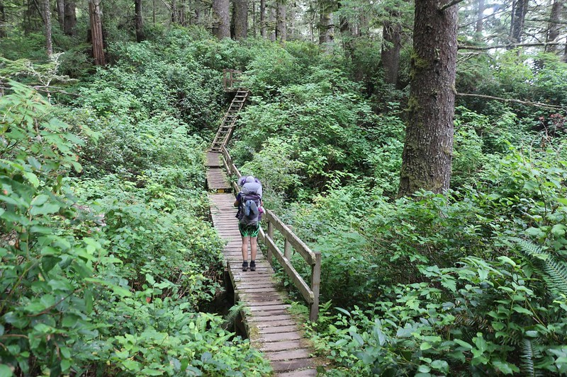 Wooden bridges and ladders make travel possible in the rain forest on the West Coast Trail