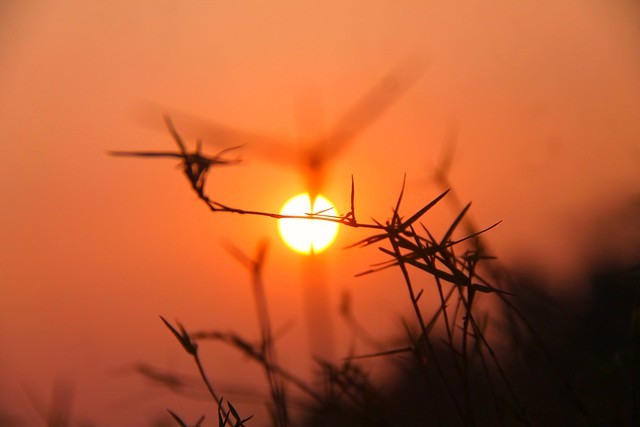 Meadow Grass at sunset.