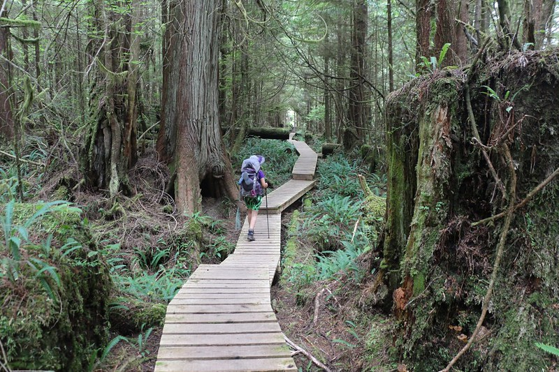 Mossy, ferny forest on the West Coast Trail south of the Whyac First Nations section, with new wooden walkways