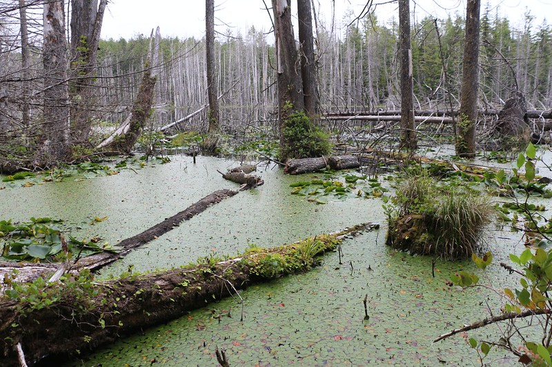 The trail passed by a very wet and boggy lake, in the Whyac Section south of Nitinat Narrows on the WCT