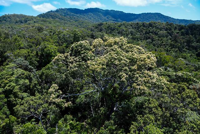 forêt Cairns