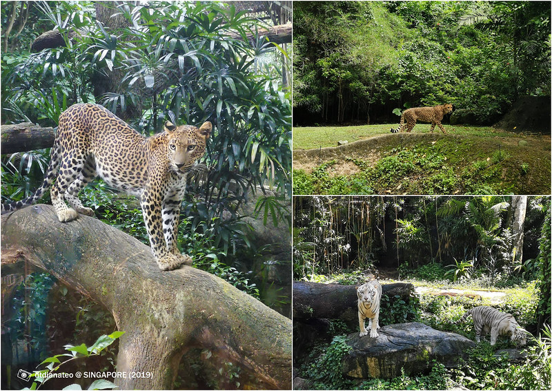 2019 Singapore Zoo 2