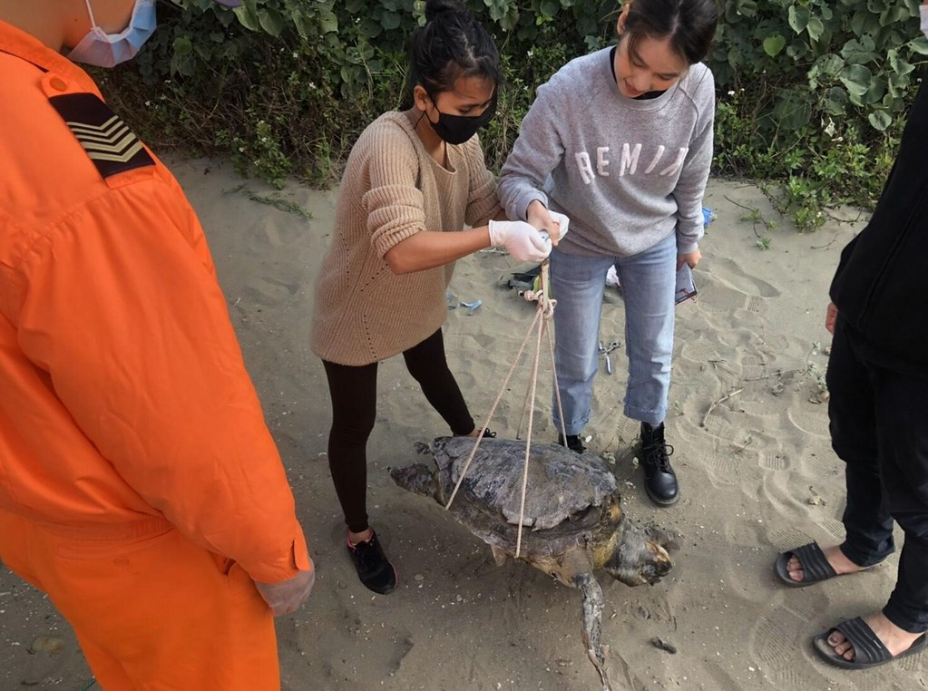 海寶溝沙灘海龜死亡