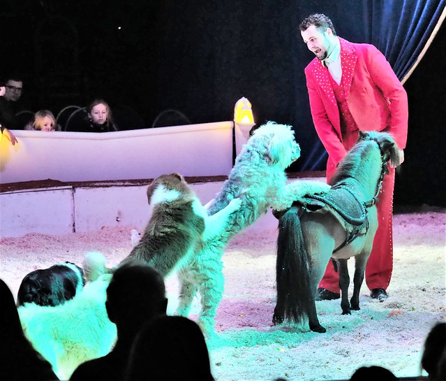 Animal Trainer Roban Kübler with Pony and Dogs during a Christams Circus Show in Wiesbaden, Germany - December 28, 2019