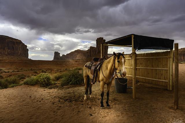 Horse near John Ford Point - Monument Valley - Arizona - USA
