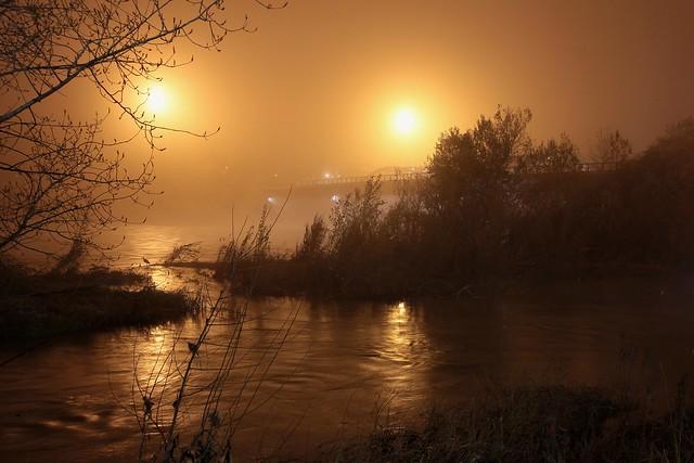 Garza en la niebla//Heron in the fog