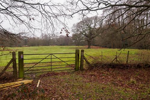 cyclepath downslink epm1 farm gate historic landscape mft microfourthirds olympus pen railway shalford surrey guildford england unitedkingdom
