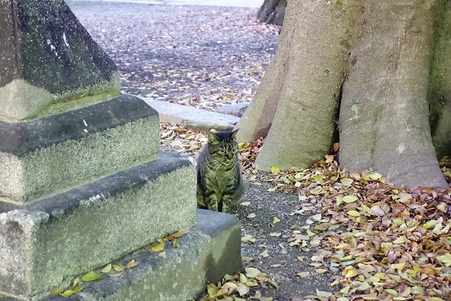 Today's Cat@2019-12-29