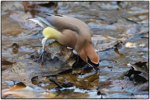 barberlake raphaelkopanphotography birds nikon nature d500 ohio 600mmf4evr 14xtciii
