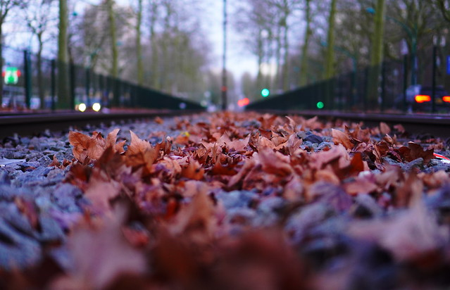 Nature's red carpet