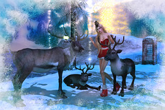 Reindeer Wonders