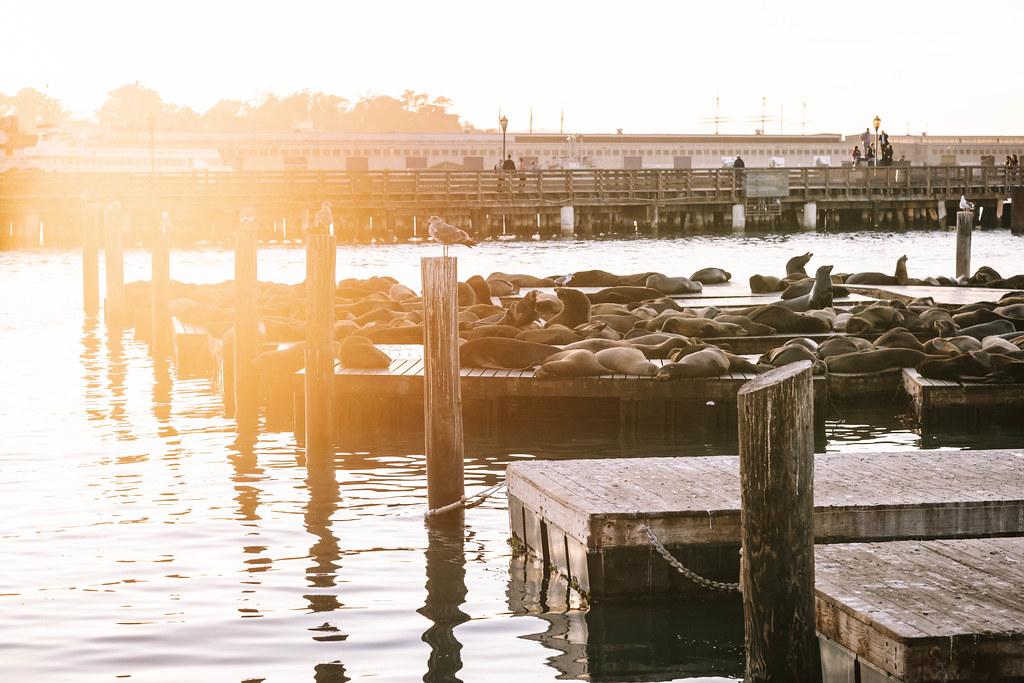 San Francisco_DSF1165