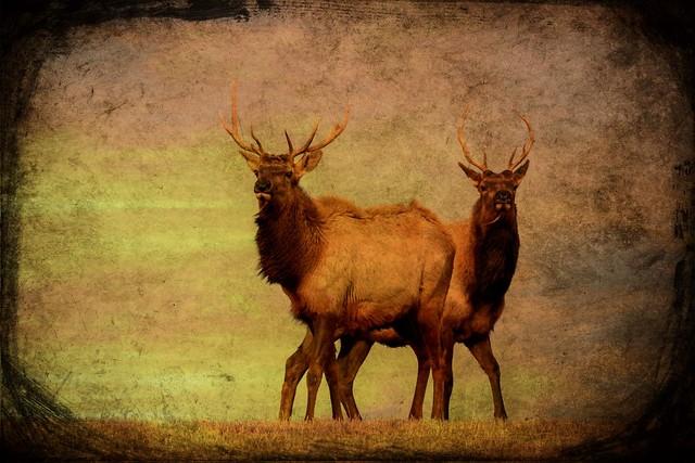 Brotherhood of the Elk