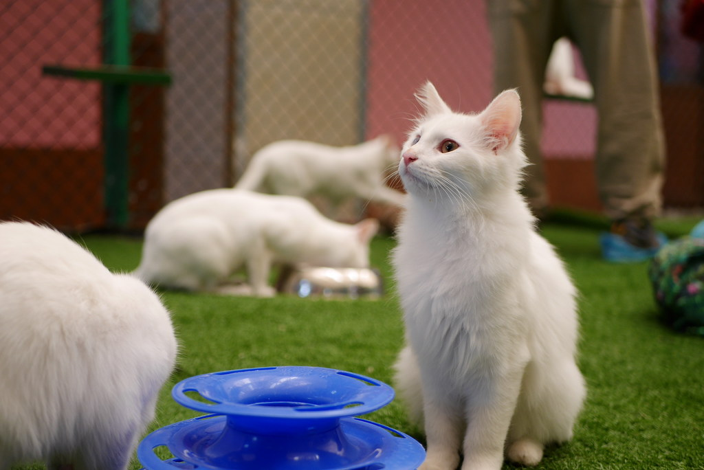 Van Kedi Villası