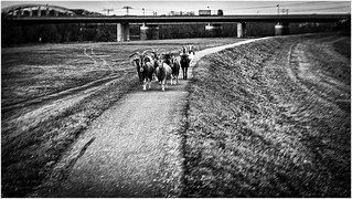 oncoming traffic | by :: Blende 22 ::