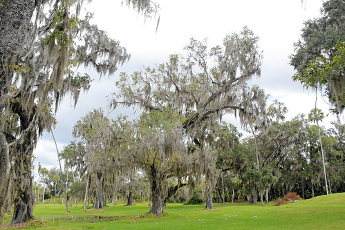 park trees landscape scenery florida spanishmoss crystalriver