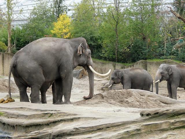 Wildlands Adventure Zoo Emmen