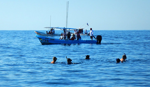 A bunch of snorkelers accidentally get caught up in out search a grey whales in Puerto Escondido, Mexico
