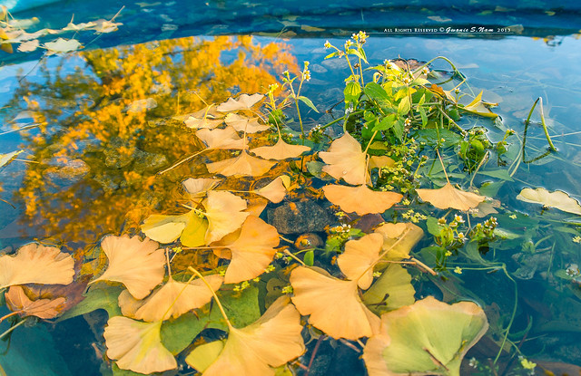 autumn colors on water