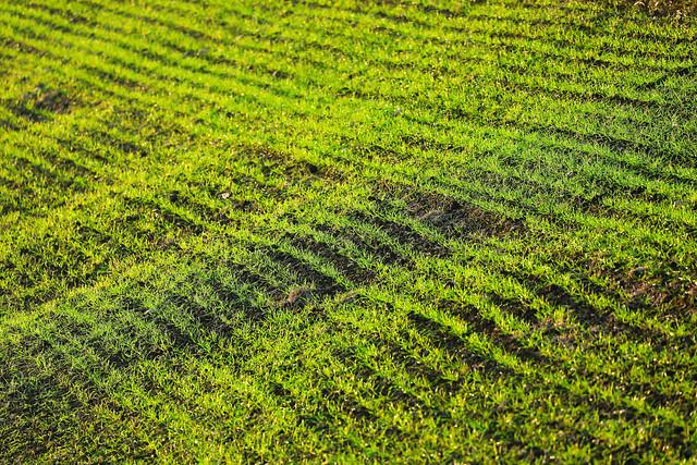 Green grass field, seen from above