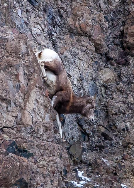 Climbing Down the Wall
