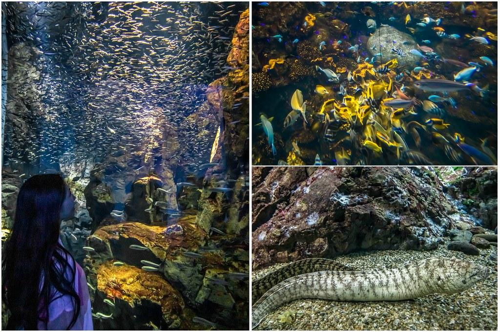 osaka-aquarium-eel-alexisjetsets