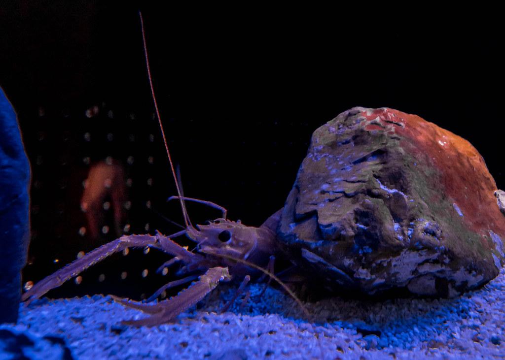 osaka-aquarium-kaiyukan-alexisjetsets-20
