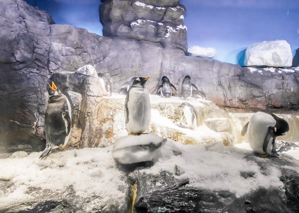 osaka-aquarium-kaiyukan-alexisjetsets-8