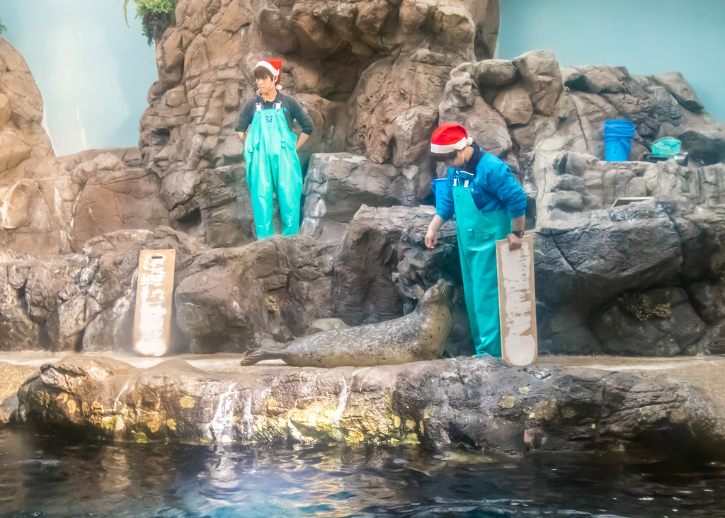 osaka-aquarium-kaiyukan-alexisjetsets-7