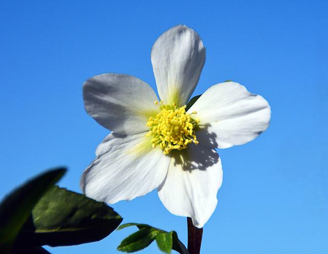 Winter flower - Fiore d'inverno