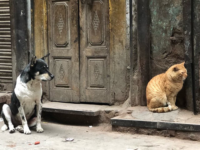 City Hangout - Cats & Dogs, Bulbuli Khana