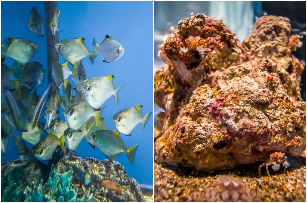 osaka-aquarium-kaiyukan-japan-alexisjetsets